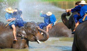 chiang-mai-elephants-with-kids