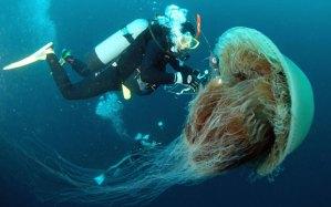 jellyfish_1845440a